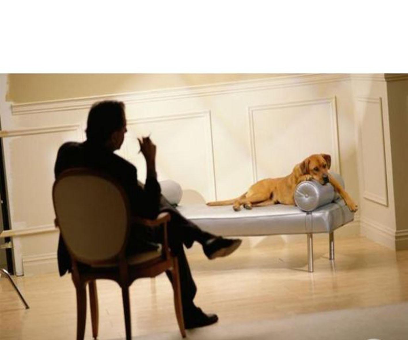 Expert comportementaliste canin