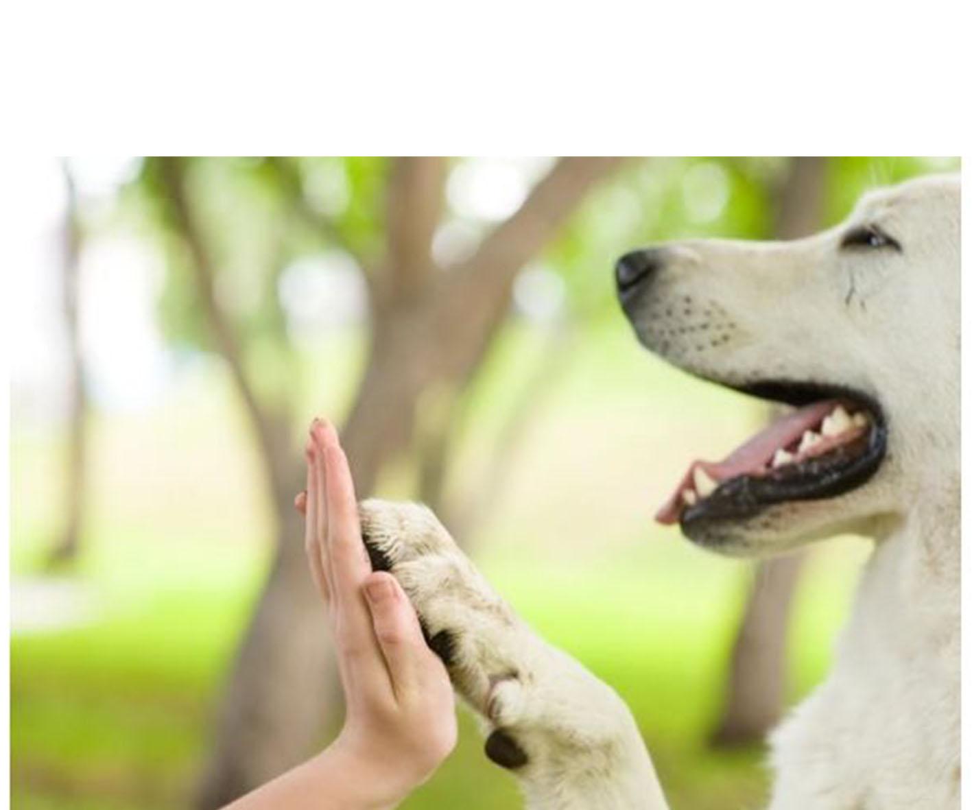 Un expert de comportementaliste canin