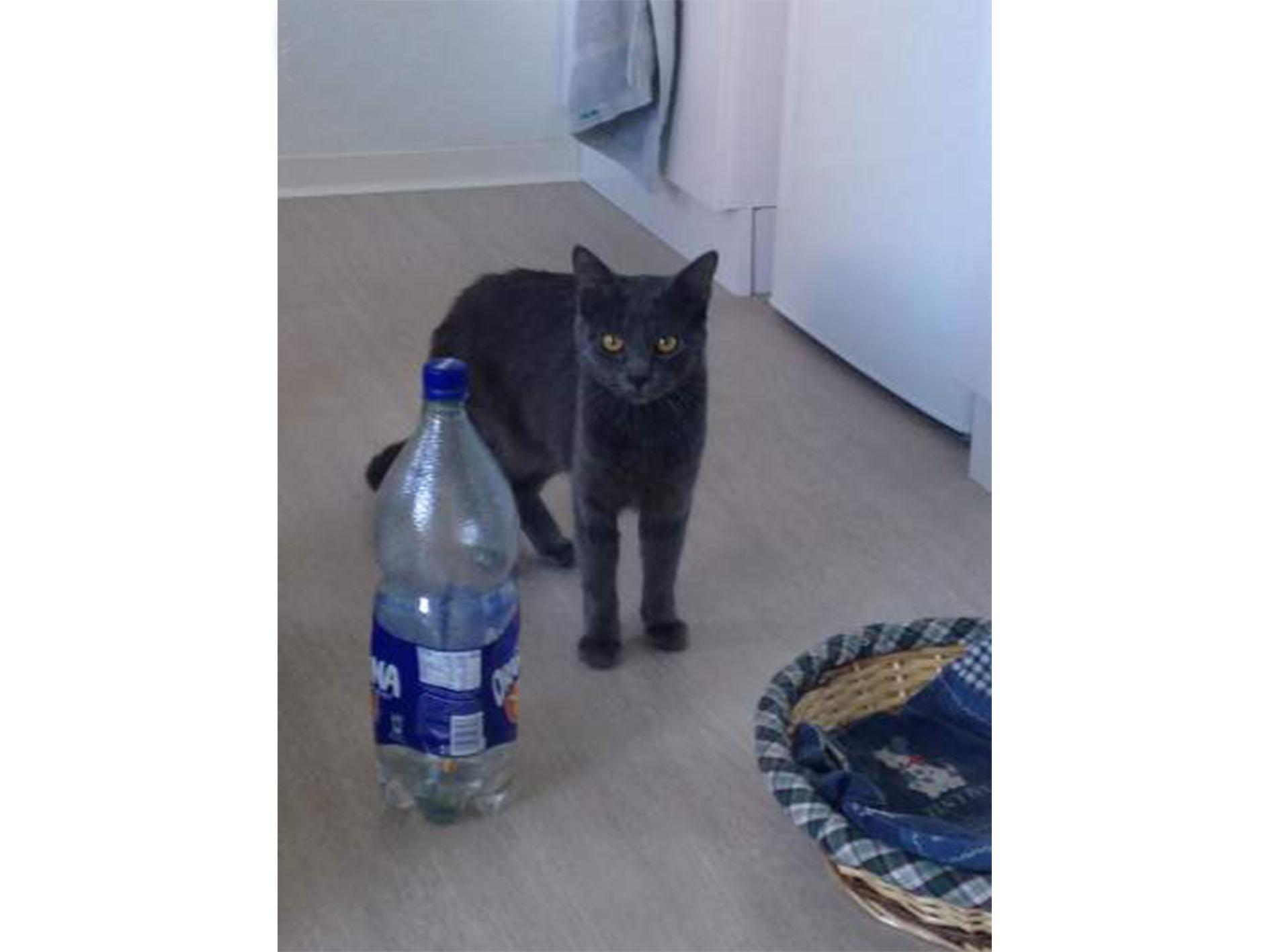 En vente un petit chaton