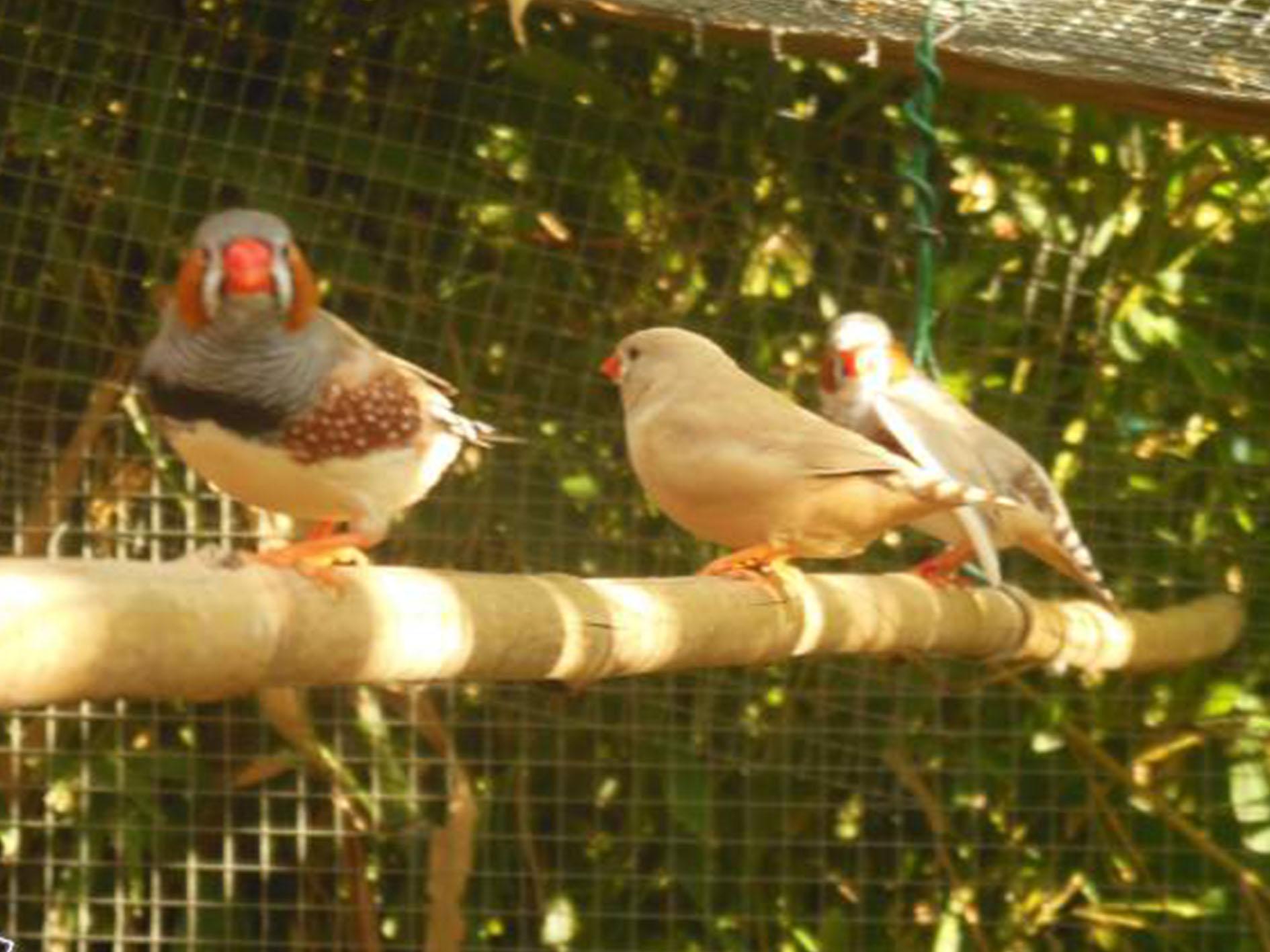 Vente d\'oiseaux de type